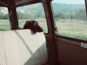 2015-06-Life-of-Pix-free-stock-photos-dog-car-roadtrip-santalla
