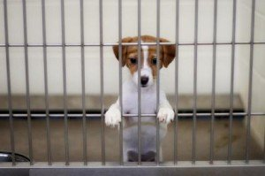 dog-in-cage-jpg